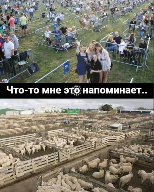 люди овцы и бараны