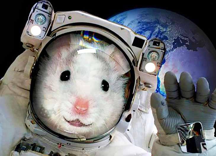крыса на ракете новости